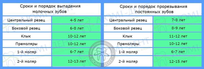 Порядок смены молочных зубов фото Киев Люми-Дент