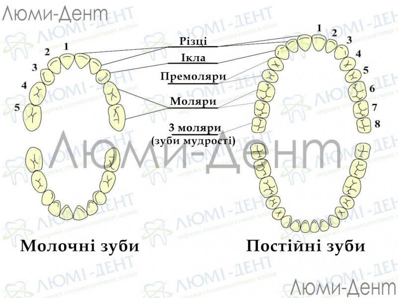 Як зрозуміти що лізе зуб мудрості фото ЛюміДент