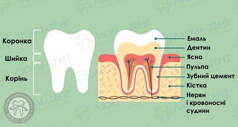 Зубний нерв фото ЛюміДент