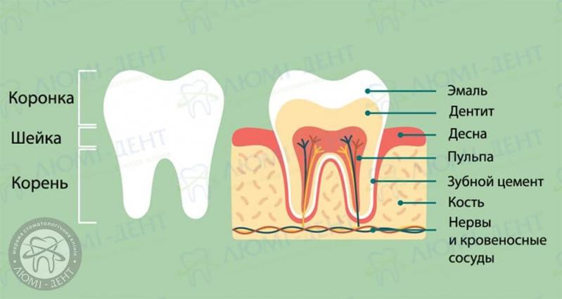 Зубной нерв фото ЛюмиДент
