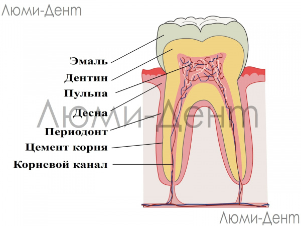 Восстановление зубной эмали зубов укрепление фото Люми-Дент