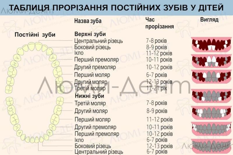 Терміни зміни молочних зубів на постійні Люмі-Дент