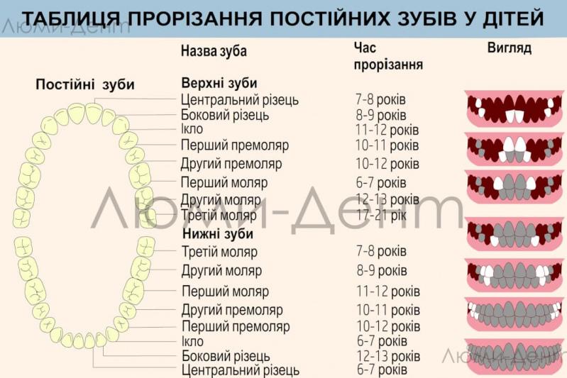 Таблиця прорізування постійних зубів фото Люмідент