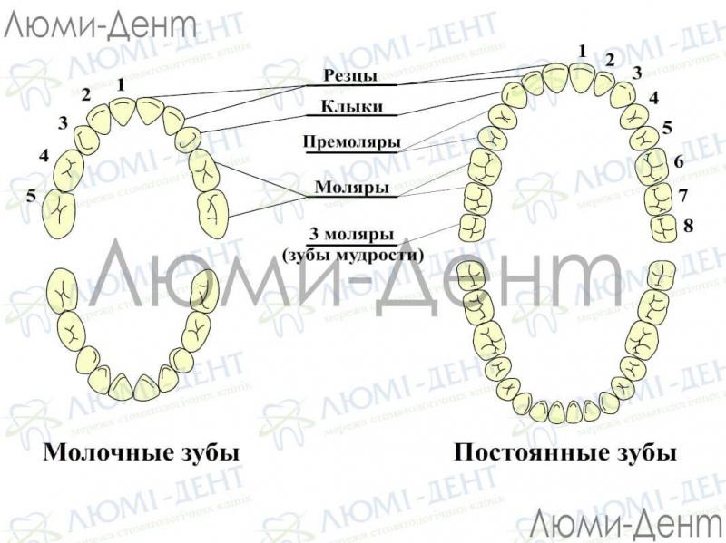 Зубы мудрости фото Люми-Дент